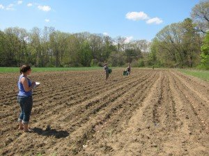 Crimson and Clover Farm | Planting Potatoes, Summer 2012
